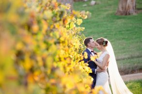 bride-and-groom-amongst-the-autumn-vines-in-porepunkah